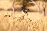 Fototapete National park - Antilope - Säugetiere
