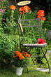 Garten Stuhl Mohnblumen