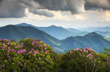 Blue Ridge Appalachian Mountains and Spring Flowers Blooming