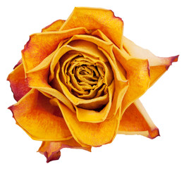 Big bud dried orange roses