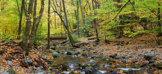 Autumn forest panorama with wood bridge over creek