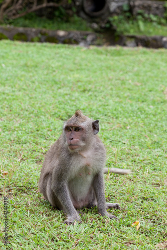 small monkey sits on a green grass