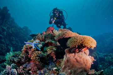 diver looking over soft coral