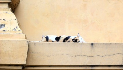 Cat sleep on wall
