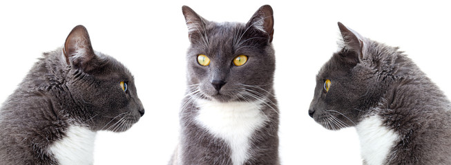 grey cats. Isolated on white background