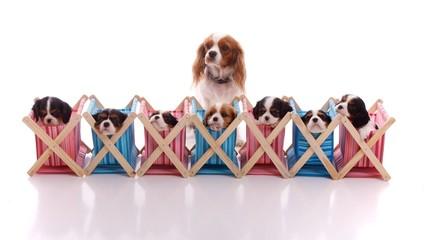 Hund mit sieben Welpen