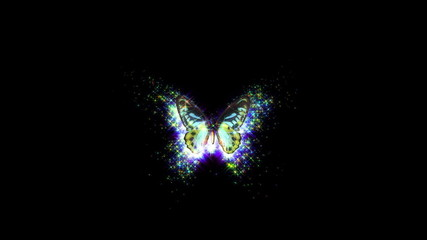 animated decorative butterfly background