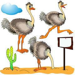 ostrich runs, covers head sand and cost(stand)s on background c