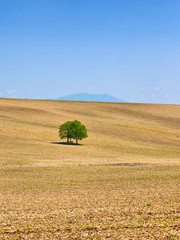 Rural Landscape with tree