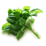 Herb Series - Basil
