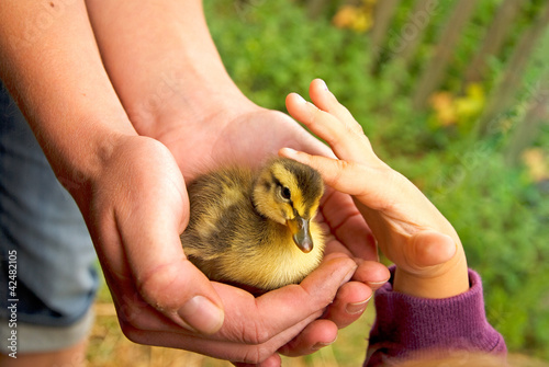 duckling and child