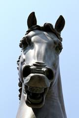 Muso del Cavallo