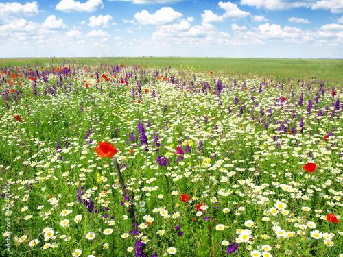 summer flowers landscape