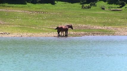 cavalli al pascolo liberi