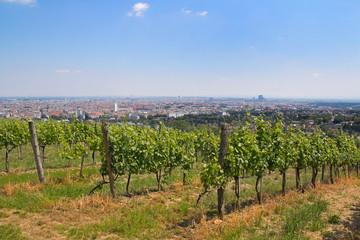 Blick über Wien mit Weinreben