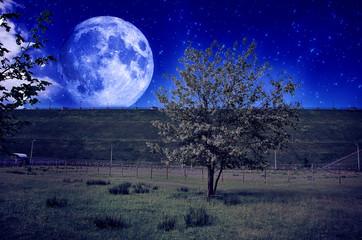 Albero con luna