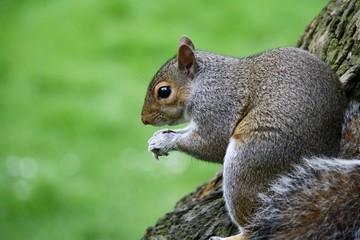 Il pranzo dello scoiattolo