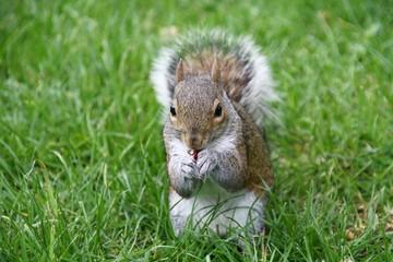Lo scoiattolo che sgranocchia