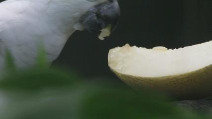 parrots and fruit