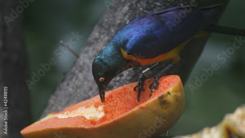 tropical birds and fruit