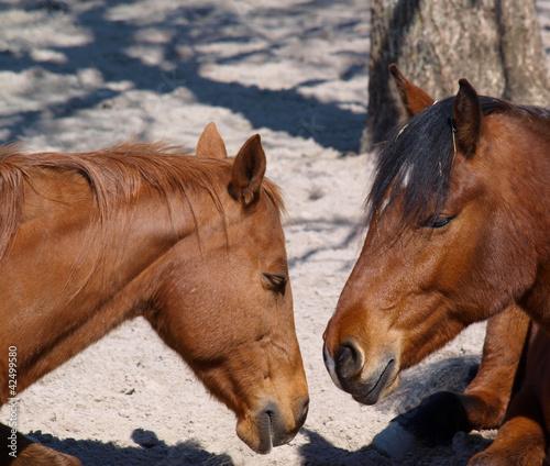 Fototapeten,pferd,pferd,schlagen,pony