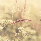 Fototapety Summer Meadow