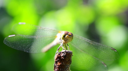 dragonfly flies away