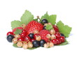 The most tasty and useful berries
