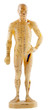 mannequin d'acupuncture chinoise
