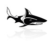 The vector image of a shark, orca, logo, sign