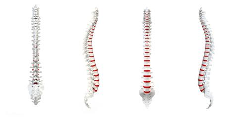 Human Spine turnaround