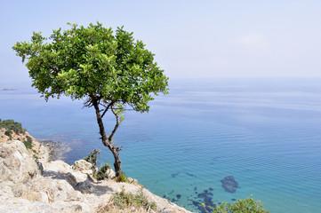 Cipro. Cyprus. Il mare e la costa nei Baths of Aphrodite