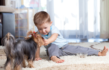 kid feeding dog puppy indoor