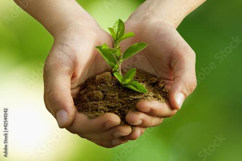 Leinwanddruck Bild árbol en las manos