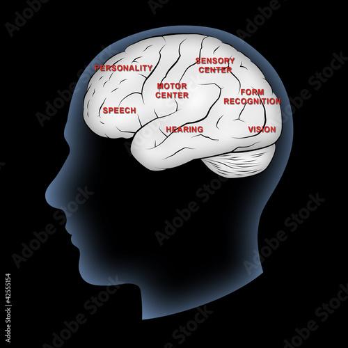 Brain Functions