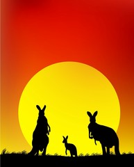 family of kangaroo