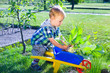 Kleiner Junge erntet Kohlrabi