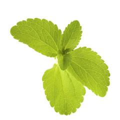feuille de stevia rebaudiana, édulcorant naturel