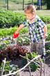 Kleiner Junge gießt Saltpflanzen
