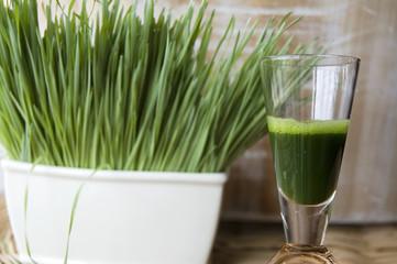 close up wheatgrass juice shot