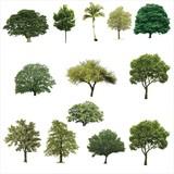 Fototapety Trees, Grass