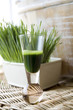 wheatgrass drink
