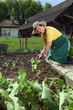 Grandmother planting vegetables