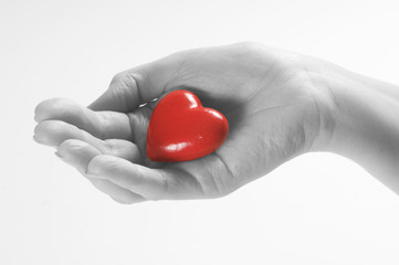 Red heart in black and white hand. Concept