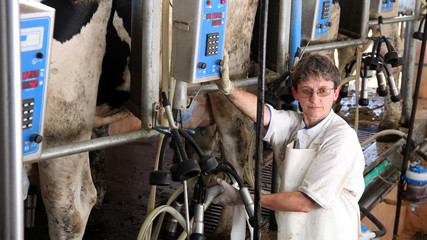 Farm Worker Milking Cows