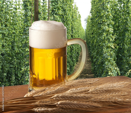 beer with hop field