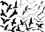 gulls collection isolated on white background