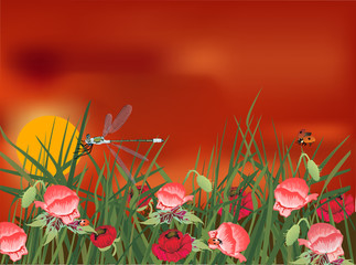 dragonfly on red poppy field