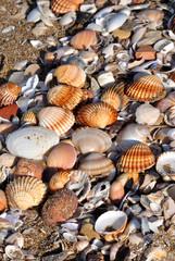 Conchiglie e sassi sulla spiaggia