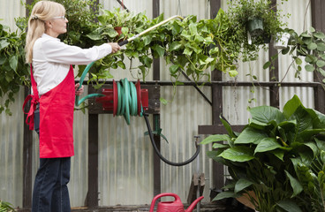 Side view of senior female gardener spraying pesticide on plants in garden center